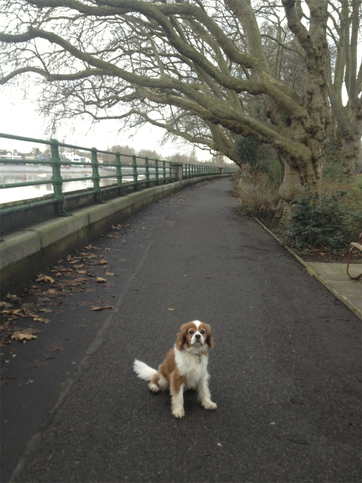 On Boxing Day I took one of the most loyal friends I have out for a long walk