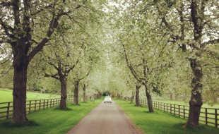 How cool is this photo? it's the driveway leading to Cawder Castle in Inverness. Beautiful.