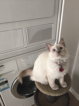 We often congratulate ourselves on ensuring the rim of the washing machine door is almost the same colour as Audrey's paws. Phew, that could have been a disaster otherwise!